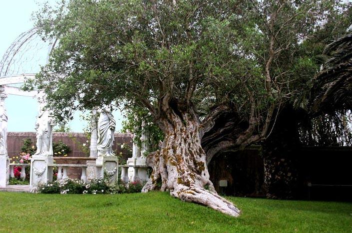 Casa de Luxo - Sintra-9