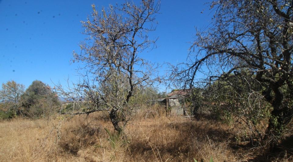 Terreno Rustico com duas ruinas para venda, Carvoeiro_1