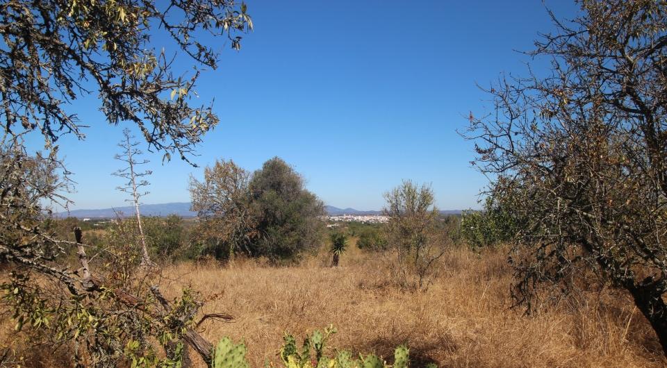 Terreno Rustico com duas ruinas para venda, Carvoeiro_3